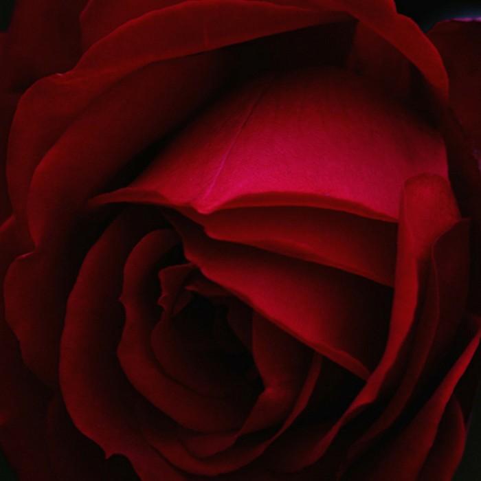 Special Valentine's Day Playlist.